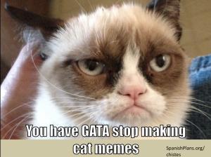 Gata stop making cat jokes
