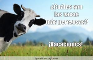 Cuales son las vacas mas perezosas? Chiste at SpanishPlans.org